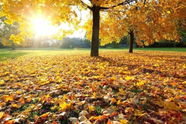 news-autumn-1