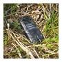 Evolveo StrongPhone Q5