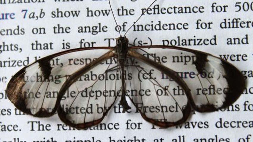 Skrzydła motyli inspiracją dla wyświetlaczy o niskiej refleksyjności