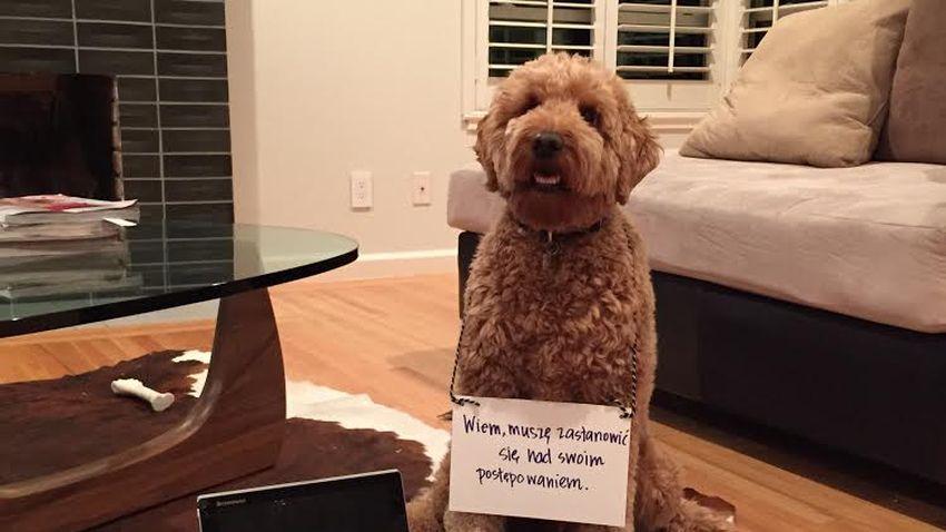 Photo of SquareTrade: Zwierzęta domowe zagrożeniem dla urządzeń mobilnych