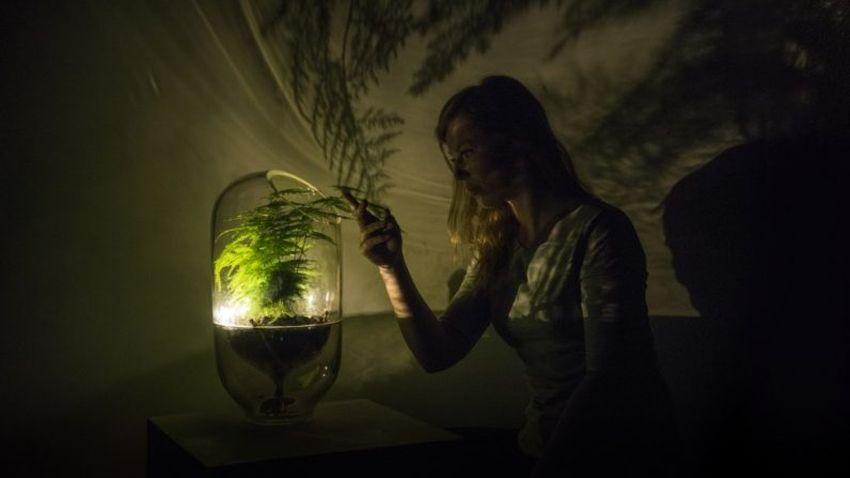 Photo of Holenderski startup przekształca rośliny w źródło światła