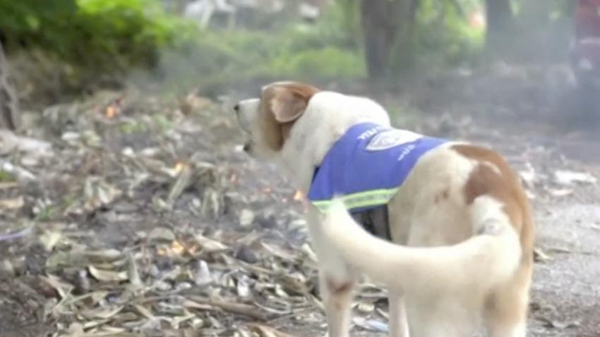 Photo of Tajlandia: Zbłąkane psy będą czuwać nad bezpieczeństwem ulic Bangkoku